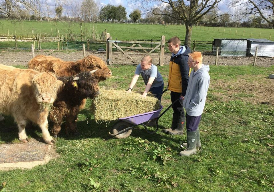New Highland Cattle on the Animal Walk