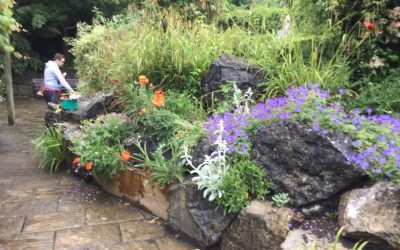 Green fingered students help with Warminster Rockery Project
